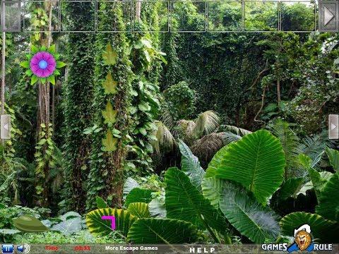 Amazon Rainforest Escape - Soluce