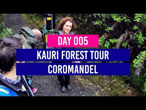 DAY 5 - Kauri Forest Tour - Coromandel - New Zealand Travel