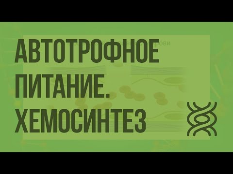 Автотрофное питание. Хемосинтез