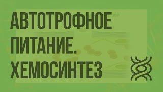 Автотрофное питание. Хемосинтез. Видеоурок по биологии 10 класс