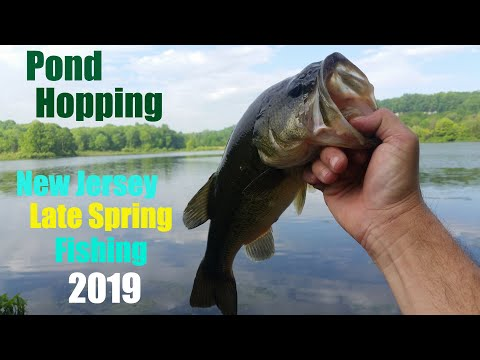 Pond Hopping - NJ Late Spring Bass Fishing 2019