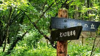 座間谷戸山公園 Zama Yato Mountain Park Wabi Sabi