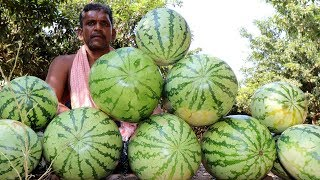 600 kg Watermelon Juice Prepared| Filtered Watermelon Juice for Kids | Country foods