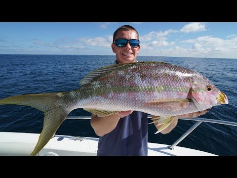 ABSOLUTE GIANT! Trophy Yellowtail Snapper  - Catch Clean Cook