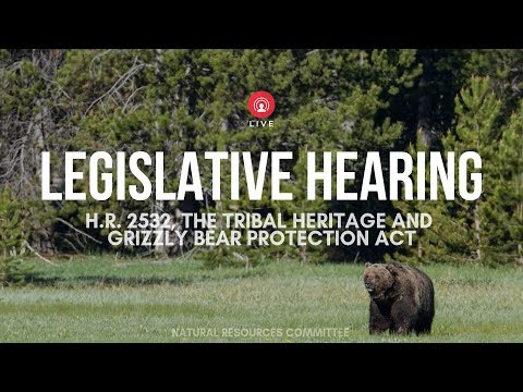 Grizzly Bear Recovery and Management