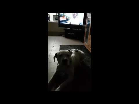 Dog says I love you..