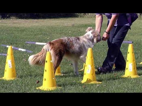 Agility exercises for dogs under 12 months with Marianne Tembey