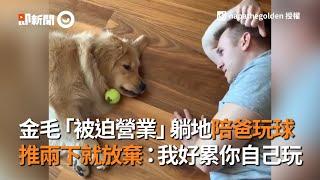金毛「被迫營業」躺地陪爸玩球 推兩下就放棄:我好累你自己玩