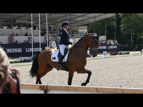 Casablanca at CH-M-D YH Final for 5 year old horses