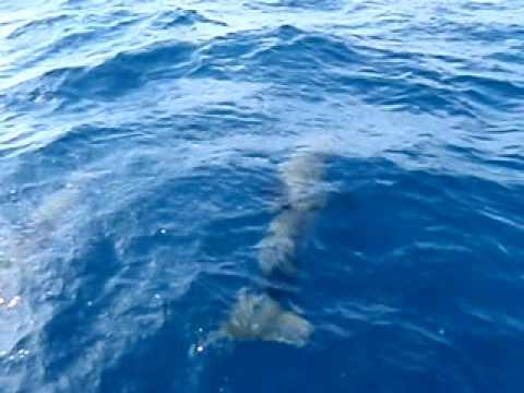 delfines en salinas puerto rico