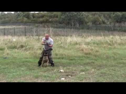 Demonstration training crowd control / tactical cqb obedience with use of firearm