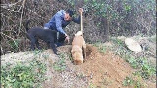 广西粉丝送来的田园犬,捕猎的技术没话可说,可惜只有1只.