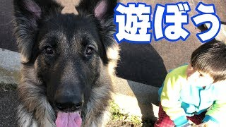 grandchild and German Shepherd dog 孫の響幼稚園年中組 園の発表会や...