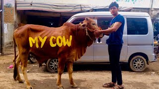 Finally !! I bought my Cow || First time Eid in Karachi | Eid Mubarak