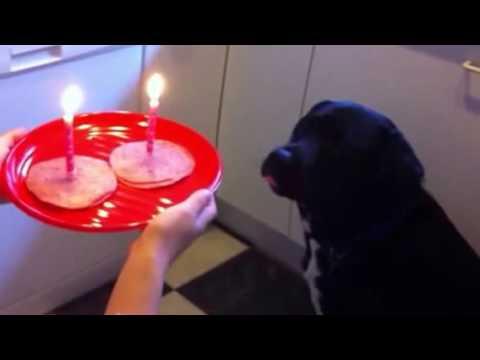 Labrottie Dog Birthday Party - Happy Birthday!