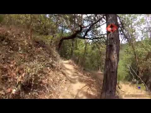 Lets go: Virtual Treadmill walk / hike #1 Late Summer Jacksonville Oregon Forest Park 4k ASMR
