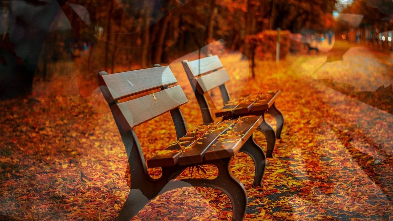 autumn trees wallpaper || fall trees wallpaper - youtube