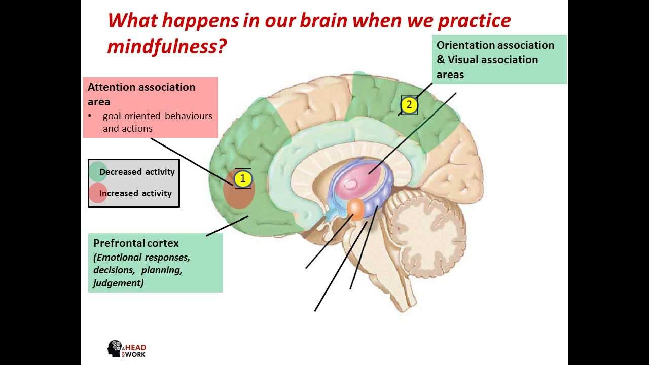 what does meditation do to the brain