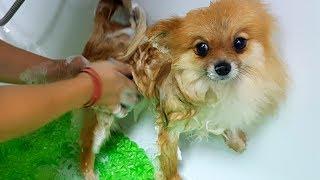VLOG ДЕНЬ РОЖДЕНИЯ АЛИСЫ! - Необычный подарок для собаки.