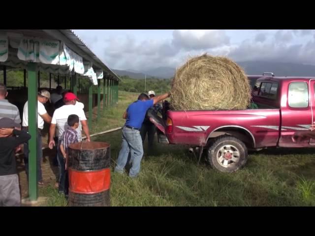 Gobierno responde al llamado de productores de San Esteban y entrega 160 mil libras de heno