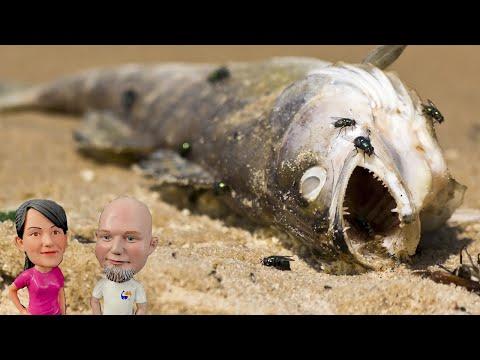Disposing Of Dead Fish, How Do You Do It? New Website Design!  (Live Stream)