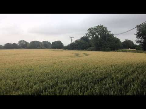 Dog jumping through field is pure bliss
