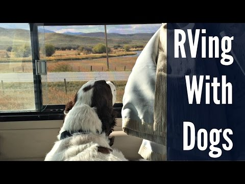 Tips For RVing With Dogs.