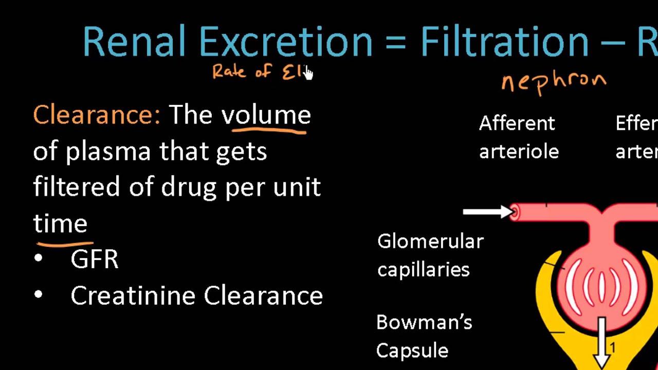 Renal Excretion Of Drugs Pharmacokinetics Lect 13 Youtube