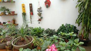 Plantas Que Não Precisam De Sol Para Sobreviver