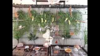 My New Indoor Finch Aviary Flight Cage