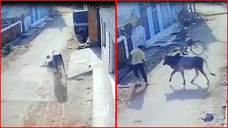 On cam: Man attacked, tossed by furious bull