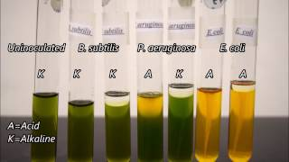 microbiology oxidation and fermentation tests time lapse