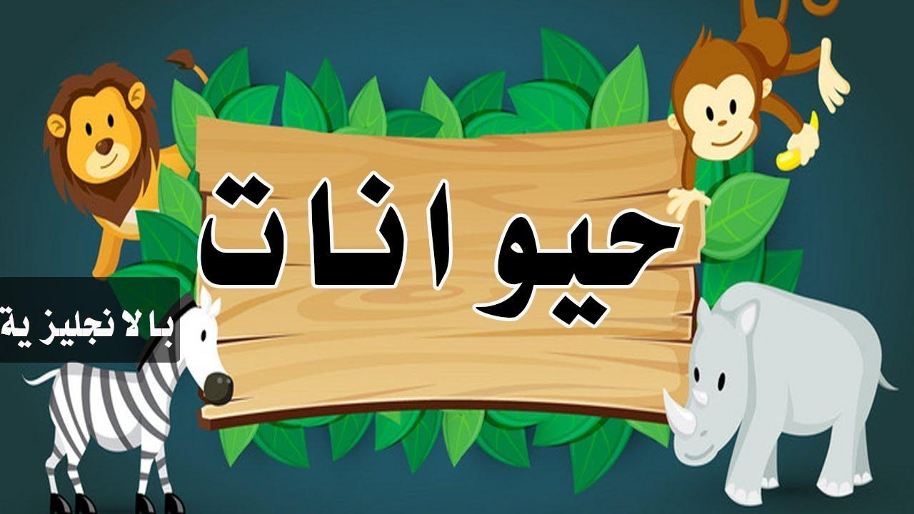 كلمات عربي انجليزي حيوانات بيبي طيور Toyorbaby 2017 اغاني