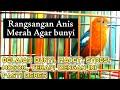 Anis Merah Plong Pendek Pendek Cocok Untuk Rangsangan Anis Merah Macet  Mp3 - Mp4 Download
