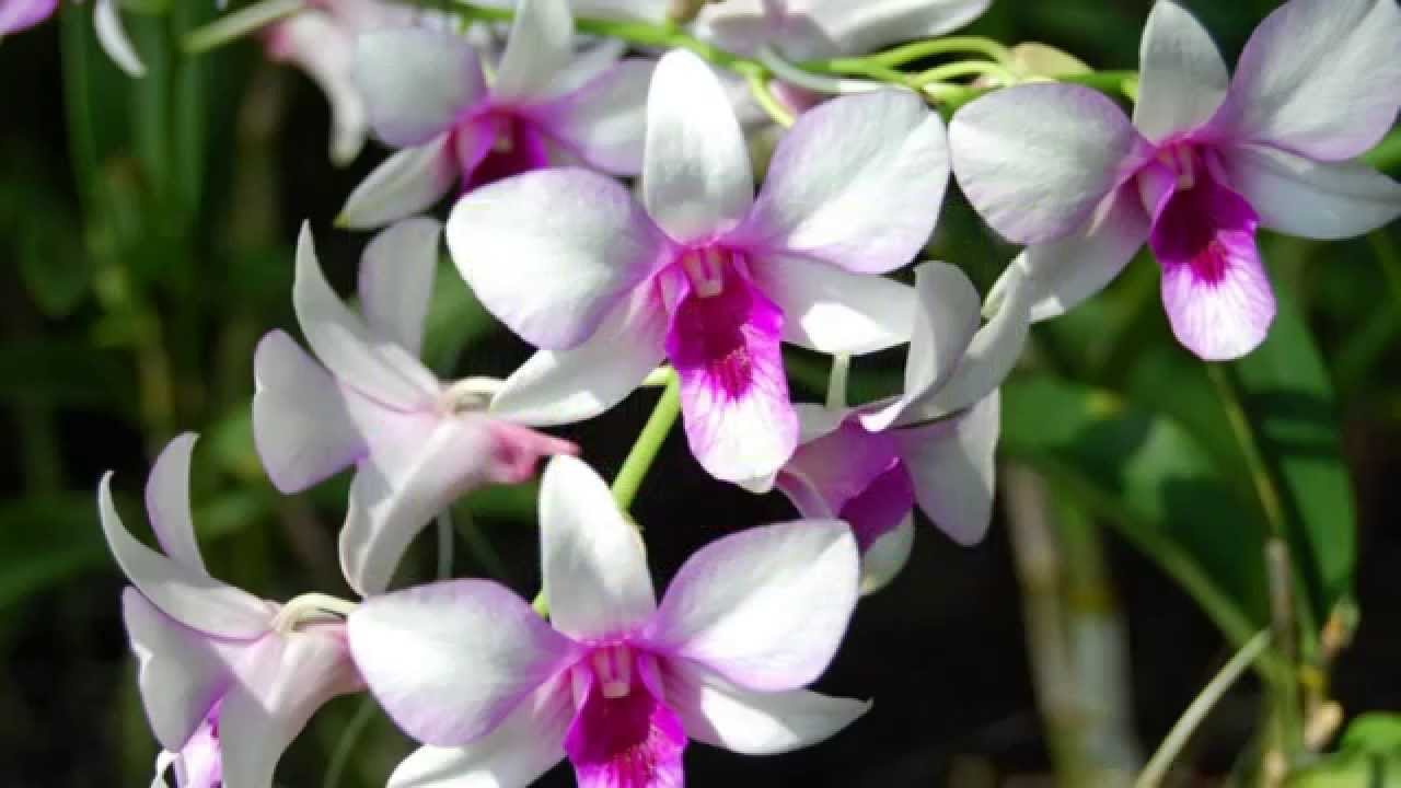 Mengenal Nama Nama Bunga Yang Ada Di Indonesia Youtube