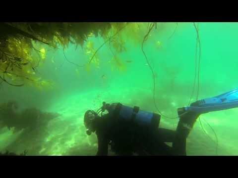 Diving The King Harbor Breakwall