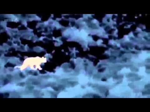 Nature's Nighttime World  Patagonian Mountains   Nature Documentary