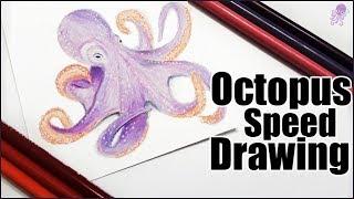 Octopus Speed Drawing   Prismacolor pencil art