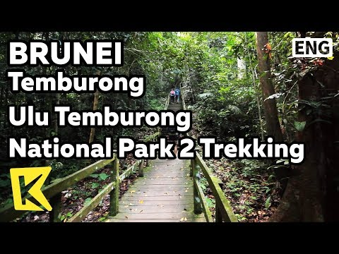 【K】Brunei Travel-Temburong[브루나이 여행-템부롱]울루 템부롱 국립공원 2 트레킹/Ulu Temburong National Park/Jungle/Trekking