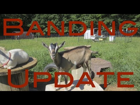 How To Band Video Update