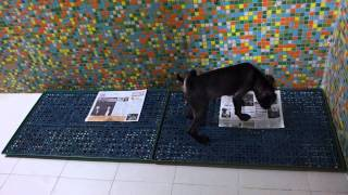 Eve's dogs for adoption-Louto is potty trained!