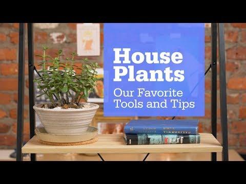Houseplant Starter Kit