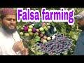 Falsa farming Informative prectical :urdu,hindi'*