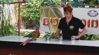 Представление с попугаями. Израиль. Отдых в Хамат-Гадер.(, 2014-09-26T08:56:27.000Z)