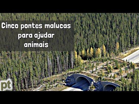 Como as pontes verdes podem salvar os animais? | Minuto da Terra