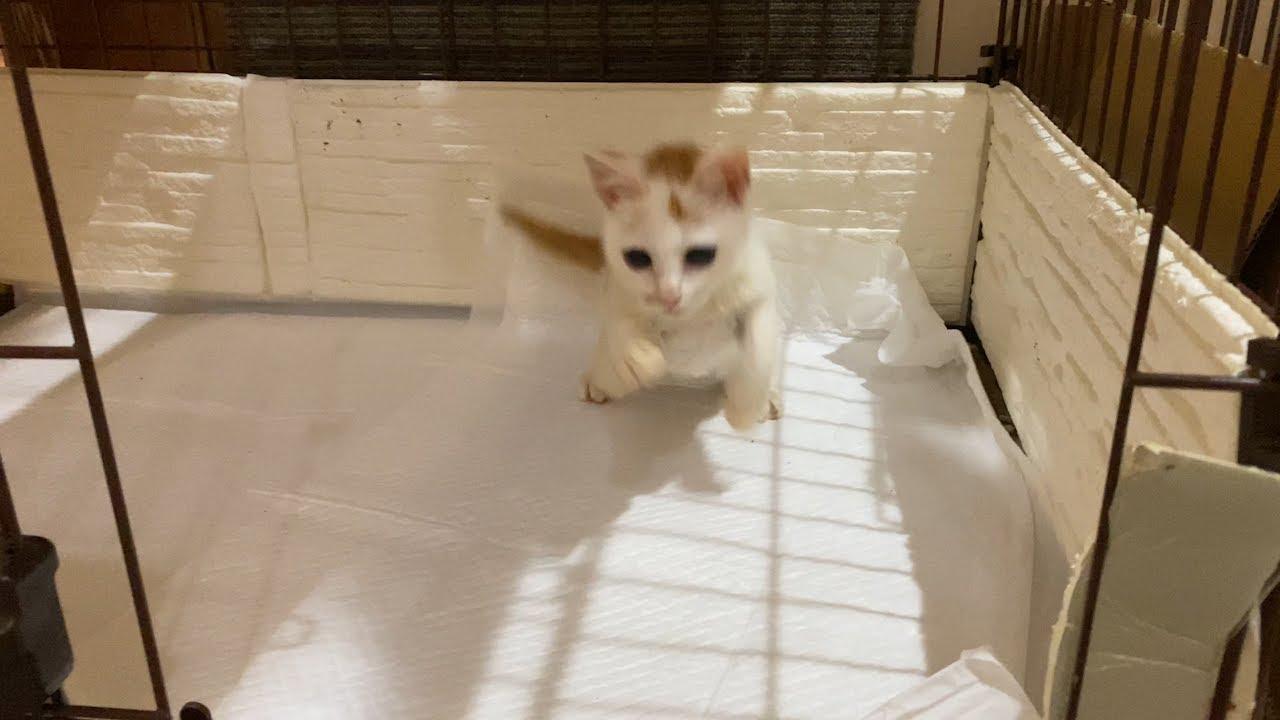 子猫のロロ大ジャンプをするの巻