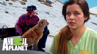 Mascota de la nieve | Dr. Jeff, Veterinario | Animal Planet