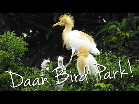Daan Forest Bird Park!! 🐦 ... and really yummy vegan food!