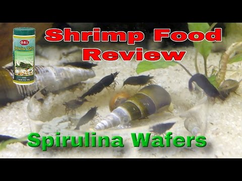 Shrimp Food Review: Spirulina Wafers - test at 30 min, 60 min and 24 hours Food - PART #5