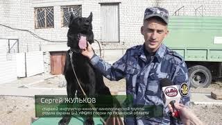 День города - новости Рязани 20.09.18